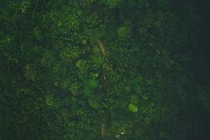 tree-forest-grass-person-sunlight-textur