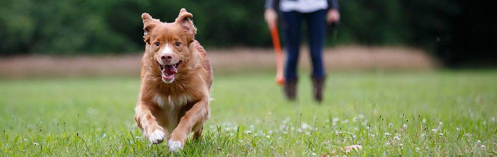 Naked Dog Training Dog Chasing Ball.jpg