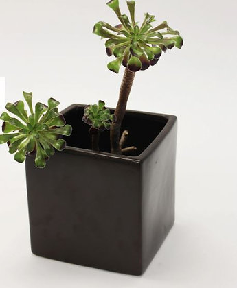 Cube Charcoal Planter