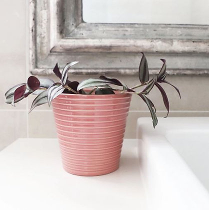 Pink Rippled Pot
