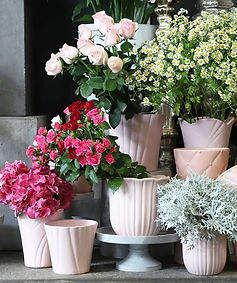 Planters and Plants