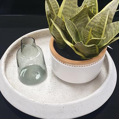 Sansevieria in White pot
