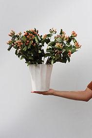 Vases - concrete designer vase