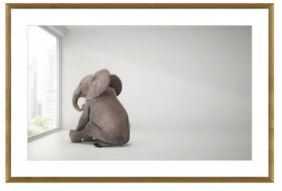 Baby Elephant Day Dreaming