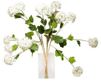 Snowball Flower