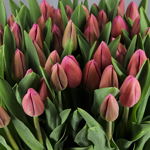 Ramo Tulipán Fucsia