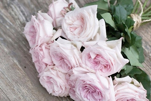 Ramo de Rosas de Jardín Pink Ohara