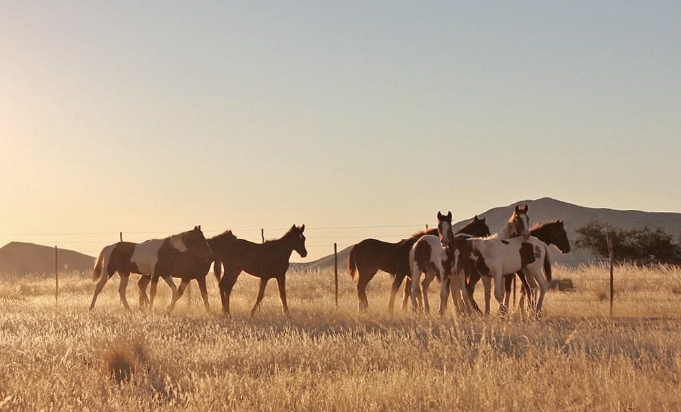 Weaned foals