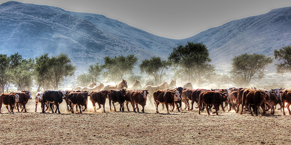 Ranch Korais Cattle & Horses