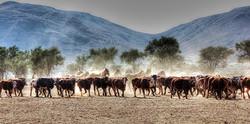 Ranch Korais Cattle & Horses