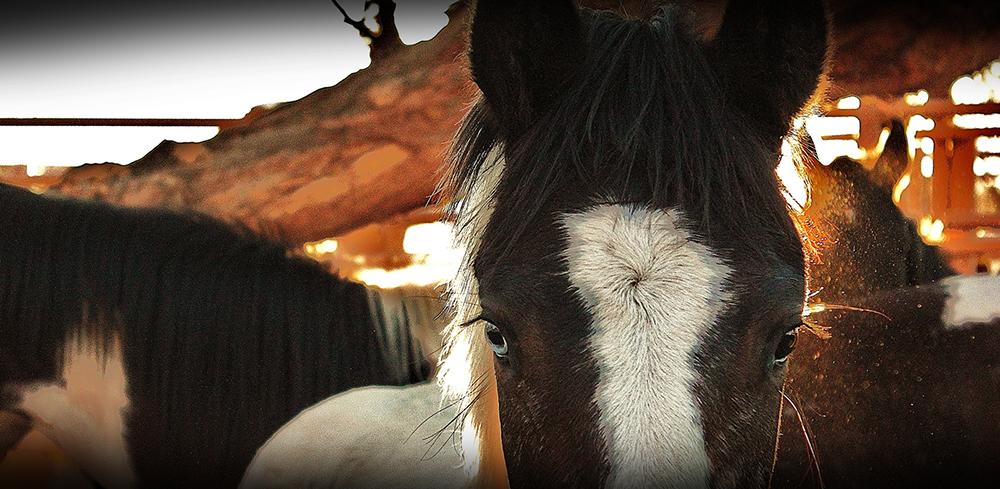 Blue-eyed foal
