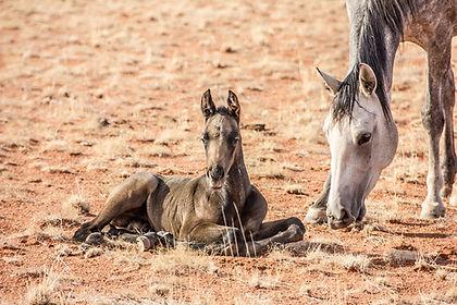 Ranch Koiimasis offers a very special riding vacation in the wild and beautiful south of Namibia. Die Ranch Koiimasis bietet Reiturlaub der besonderen Art, im wilden und wunderschönen Süden Namibias.