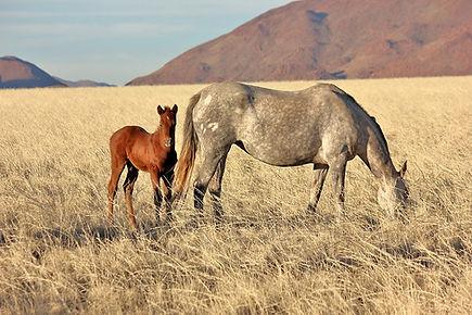 You don't have to be a western rider to have a great riding holiday at Ranch Koiimasis. Du musst kein Westernreiter sein um tolle Reiterfereien auf der Ranch Koiimasis zu verbringen.