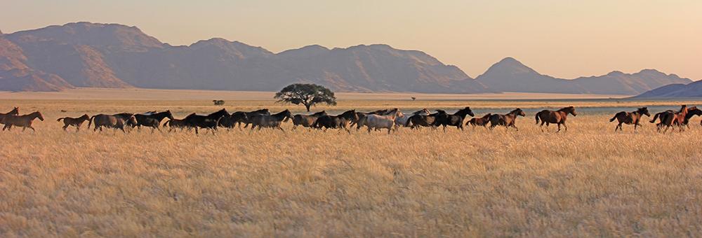 Docs herd