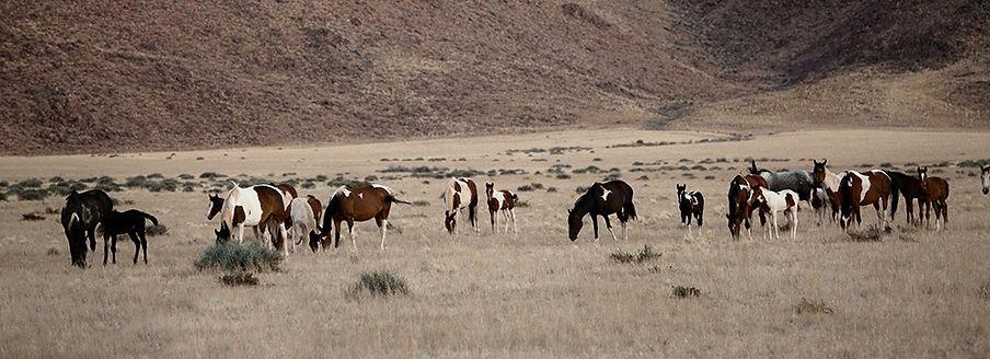 Ranch Koiimasis offers adventurous riding safaris in Namibia - find out now! Die Ranch Koiimasis bietete abenteuerliche Reit-Safaris in Namibia - informier dich jetzt!