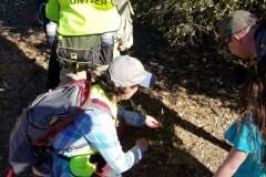 Coyote Valley Fall BioBlitz a Hit