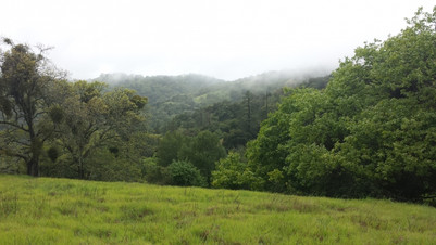 Henry Coe with fog
