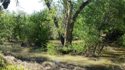 Coyote Creek looking full after the floo