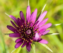 MV flower