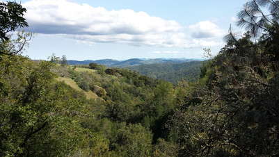 View in Henry Coe Park