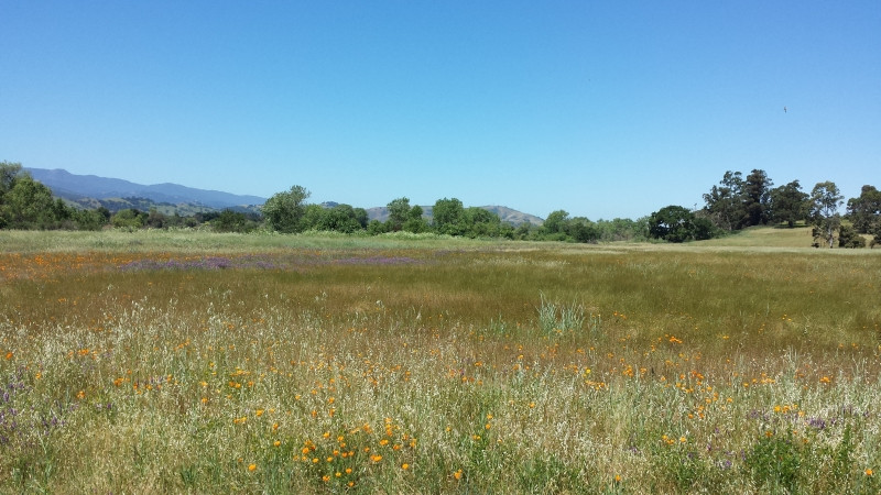 Wildflowers from Coyote Creek Trail