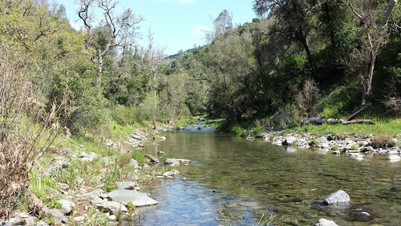 Coyote Creek in Henry Coe