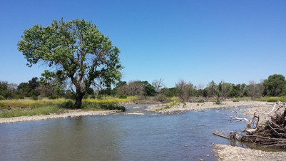 Coyote Creek in Coyote Valley