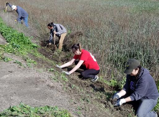 Restoring our South Bay Wetlands