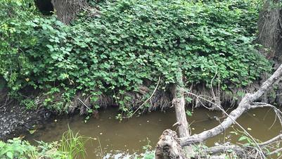 Clean creek