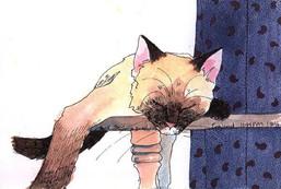 cat_nap2.jpg