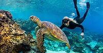 LEI-Turtle.jpg