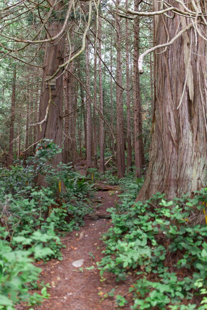 Centennial trail.jpg