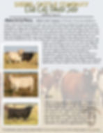 Club Calf Female Sale Flyer.jpg