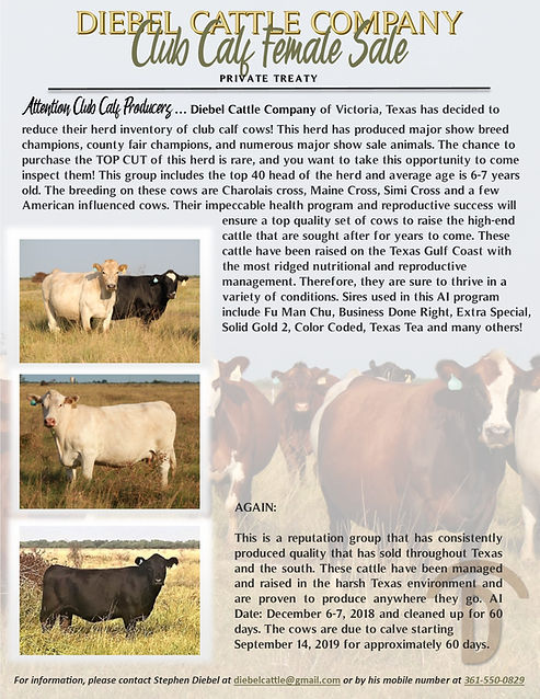 Club Calf Female Sale Flyer.jpg