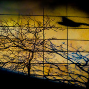 Shadow - Seattle