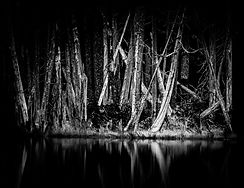 Coplay Lake trees, near Mount Rainier National Park