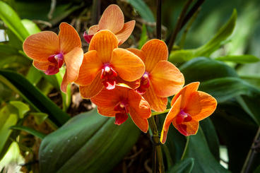 "Orchids 2 16 x 24""  Metal Print  $435"