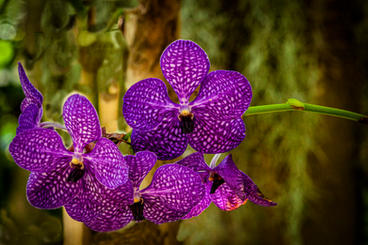 "Orchids 16 x 24""  Metal Print  $435"