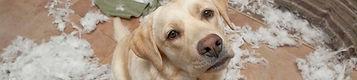 kelowna dog walking, west kelowna dog boarding, dog kennel, doggy hotel, dog watching, dog care, pet care, professional dog trainer, dog groomer, oh sit dog training, doggy daycare, kennel, west bank kelowna