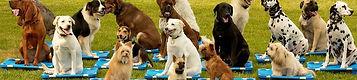 west kelowna, westbank, west bank, kelowna dog trainer, CPDT-KA professional dog training, group dog training classes, Oh Sit Dog training
