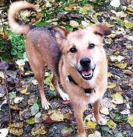 dog training, dog trainer, beaumont dog trainer, dog walker, beaumont dog groomer, beaumont dog training, dog group training classes, private dog training lessons, oh sit dog training, Beaumont, Leduc, Leduc County, New Sarepta