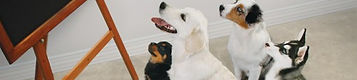 kelowna, puppy training west kelowna, positive dog training, group dog training classes, CPDT-KA certified dog trainer, Oh Sit Dog Training