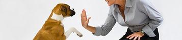 CPDT-KA kelowna, Kelwona dog trainer, private dog training lessons, Oh Sit dog training, west kelowna, westbank, west bank