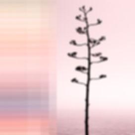 pinkki kasvi