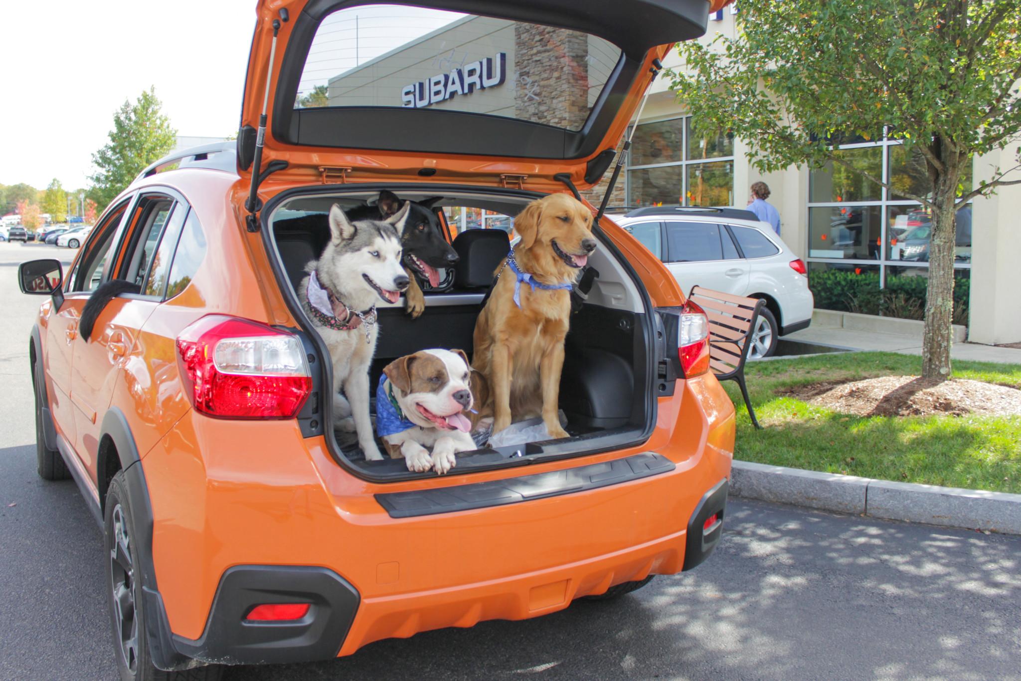 Subaru FOHA dogs in car