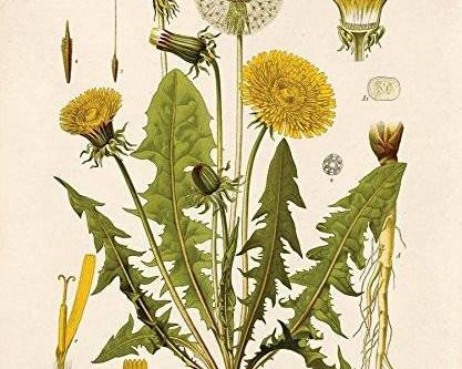 5 herbs to start using for feminine health