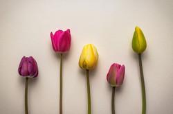 Digital - Simply Tulips by Sally Mack