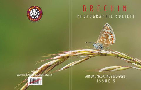 Northern Brown Argus - Ben Freeman