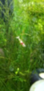 fishy shrimp.jpg