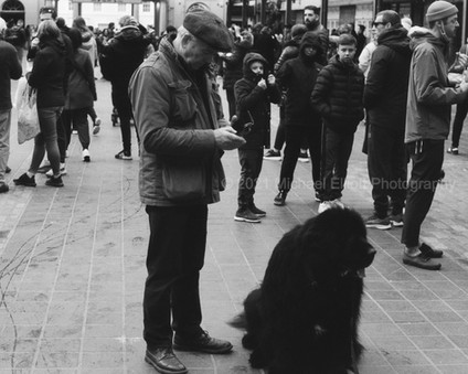Greenwich Market 5 (Big Dogs and Small Kids)